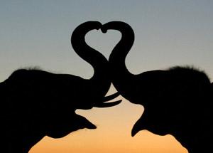 060214_animal_love.jpg