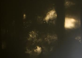 shadows15.jpg