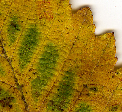 AutumnLeaves2012_detail2.jpg