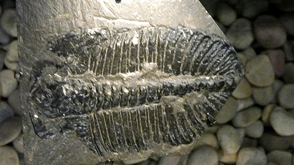 Beaty_fossil2.jpg