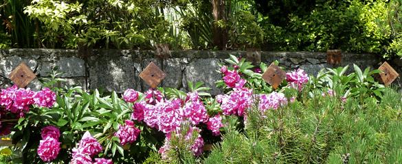 GardenArt_Peonies.jpg