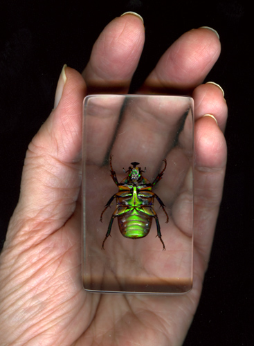 Hand-with-beetle2.jpg