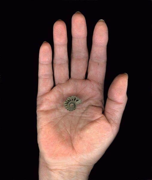 HandwithAmmonite.jpg
