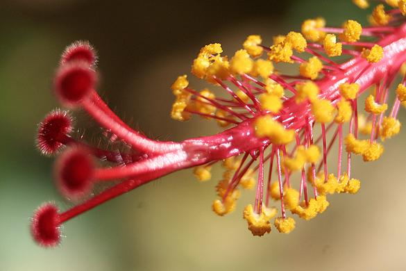 Hibiscus2012.jpg