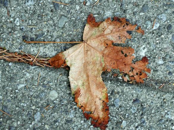 LeafUnderfoot.jpg