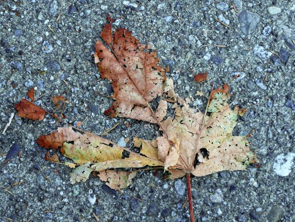 LeafUnderfoot2.jpg