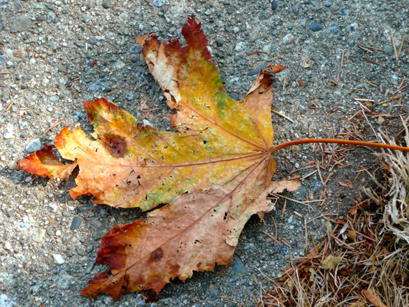 LeafUnderfoot3.jpg