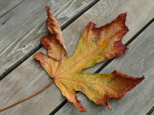 LeafUnderfoot4.jpg