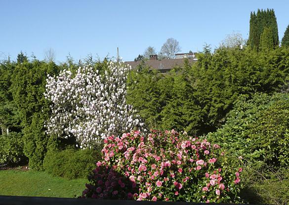 MagnoliaCamellia2013.jpg