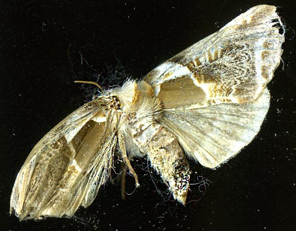 Moth2_1Sept13.jpg