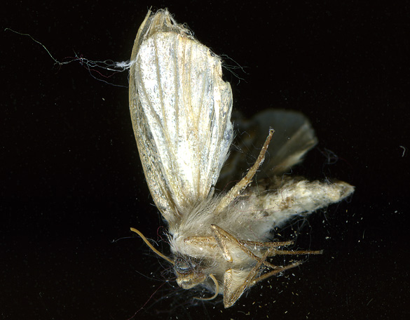 Moth3_1Sept13.jpg