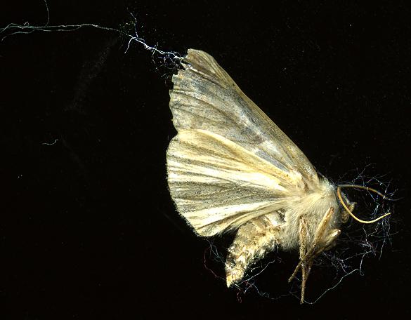 Moth_1Sept13.jpg