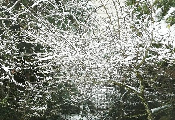 SnowJan2012_1.jpg