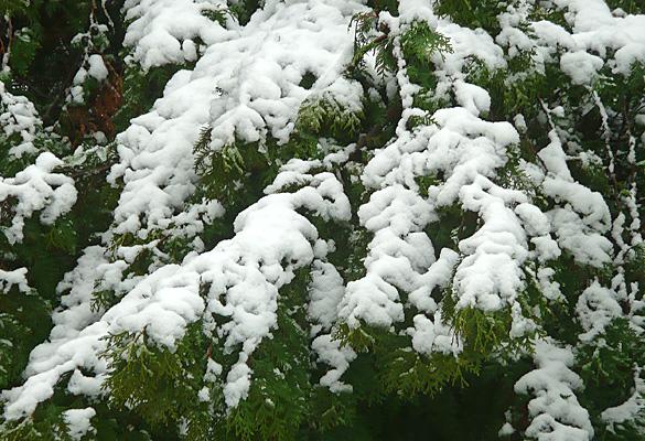 SnowJan2012_3.jpg