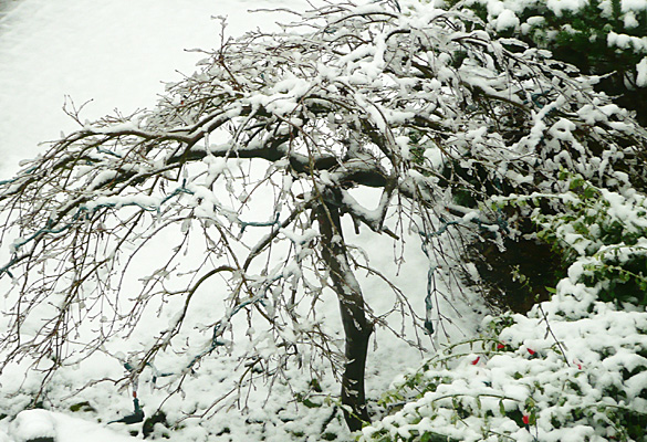 SnowJan2012_4.jpg