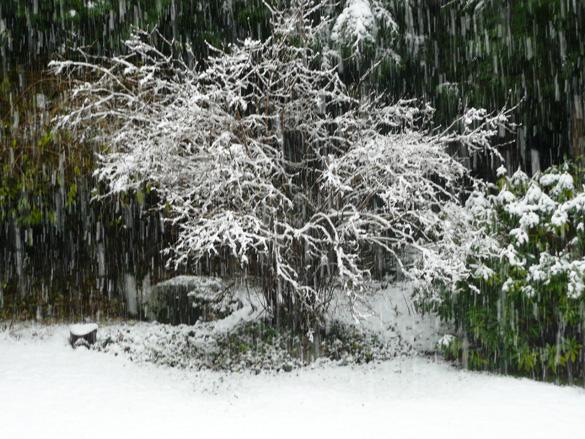 SnowingDec12.jpg