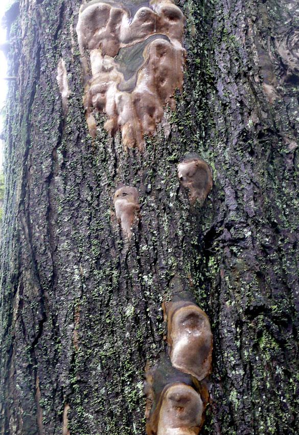 TreeFungi2.jpg