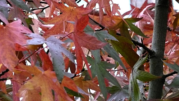 autumnLeaves2010.jpg