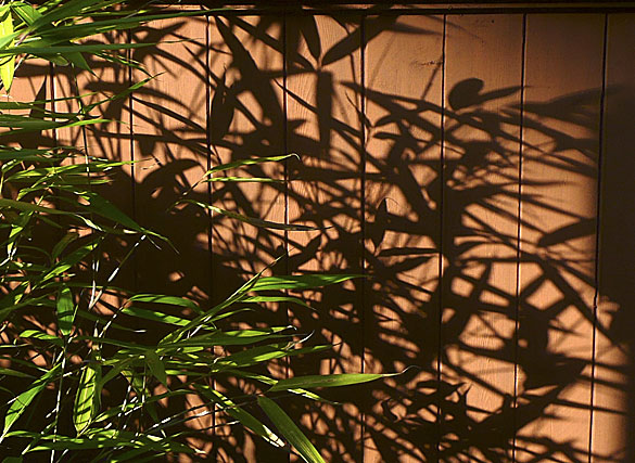bamboo_shadows.jpg