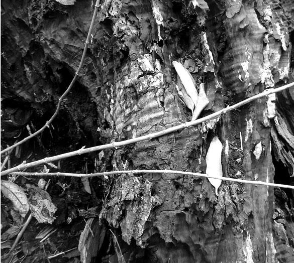 decayingMapleTrunk2.jpg