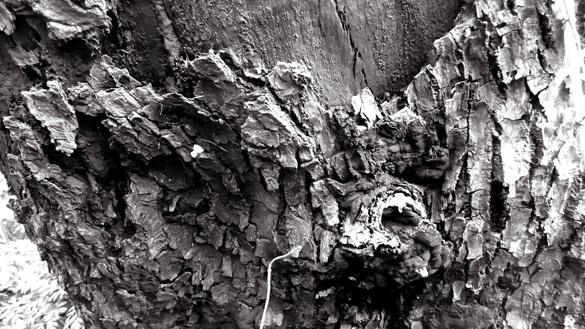 decayingMapleTrunk3.jpg