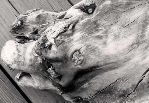 driftwood662.jpg
