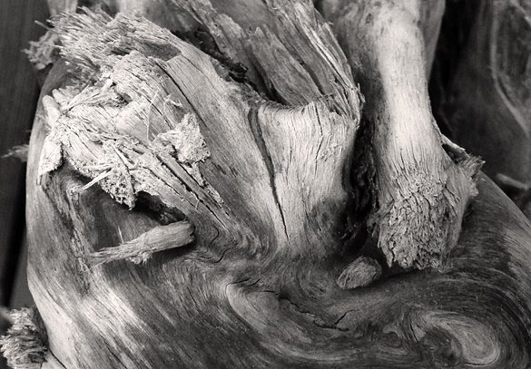 driftwood670.jpg