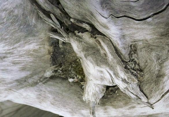 driftwood671.jpg