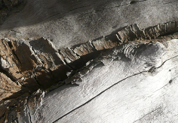 driftwood678.jpg