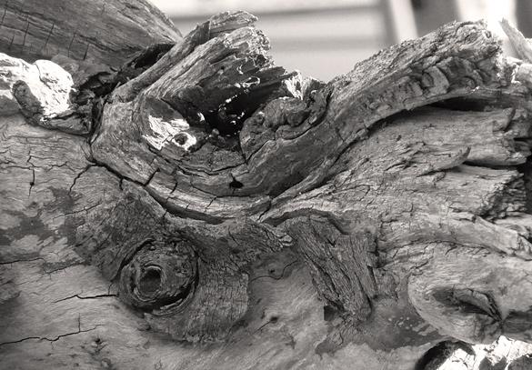 driftwood684.jpg