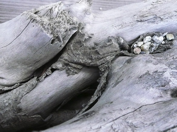 driftwood_stones.jpg