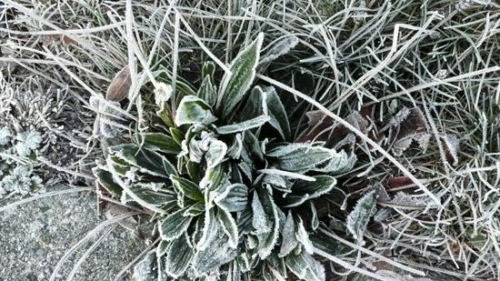 frostDec3.09.jpg