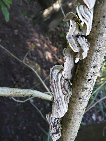 fungi_backyard4.jpg