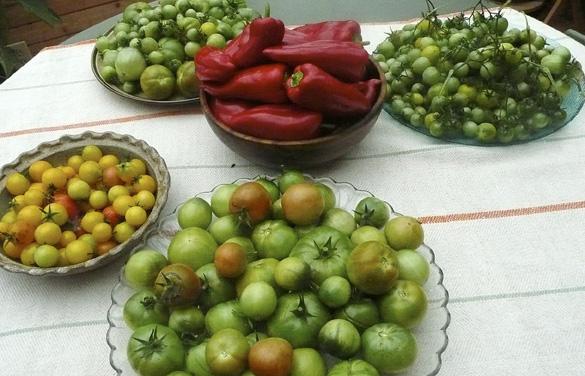 harvest2010.jpg
