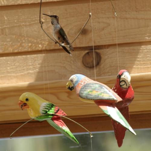hummingbird_parrots.jpg