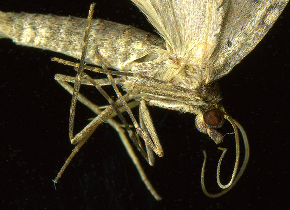 moth3detail.jpg