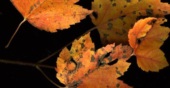orangeLeaves.jpg