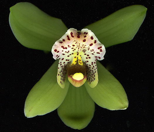 orchid3Feb2011.jpg