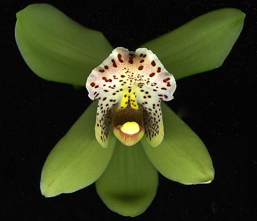 orchid3Feb2011.jpg