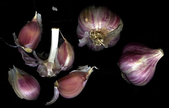 purplegarlic.jpg