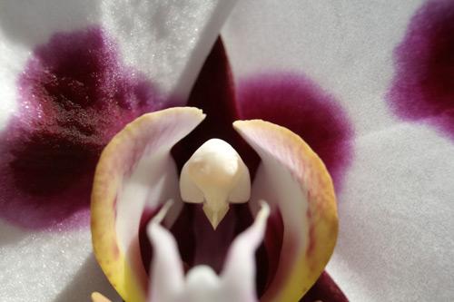 purplewhiteOrchid.jpg