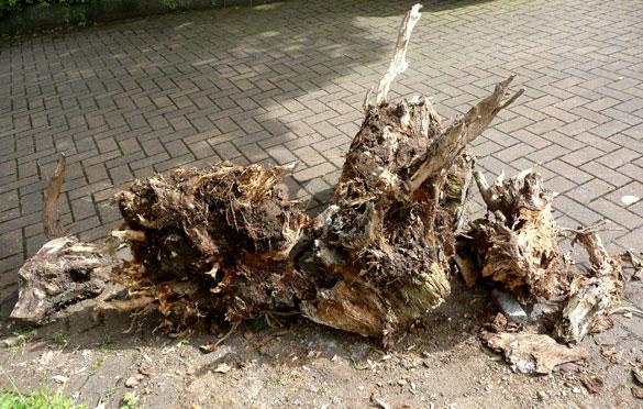 roots569.jpg