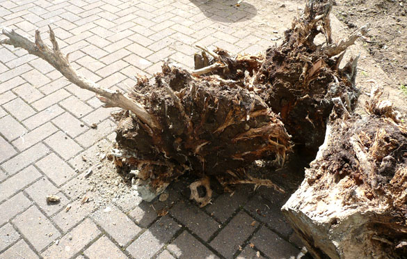 roots582.jpg