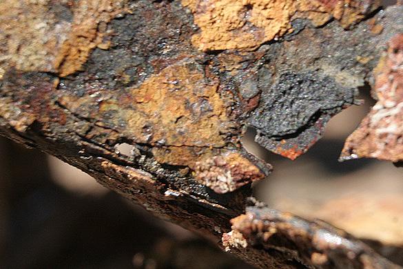 rustycan5.jpg