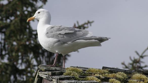 seagull.jpg