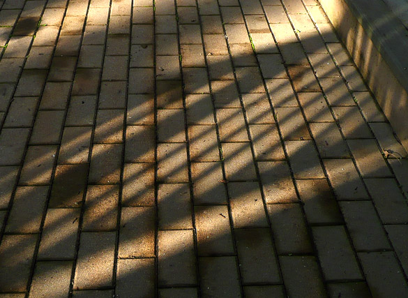 shadows23Oct11_3.jpg