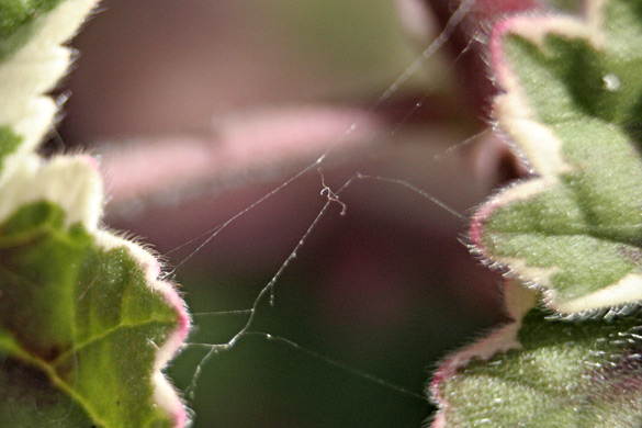 spiderweb3.jpg