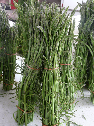 wildAsparagus.jpg