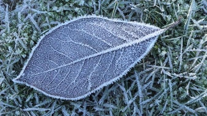 frost136_Nov13