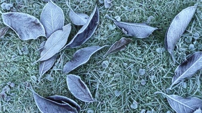 frost137_Nov13